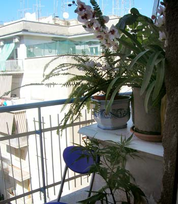 Bed and breakfast Roma - Bed and breakfast Abruzzese